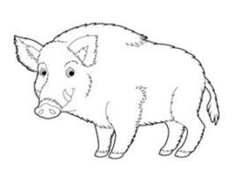 Konkurs Dzikie smaki – Schab z dzika po myśliwsku